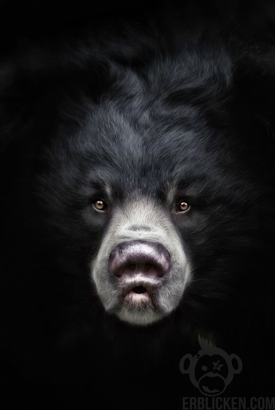 Sloth Bear Devi