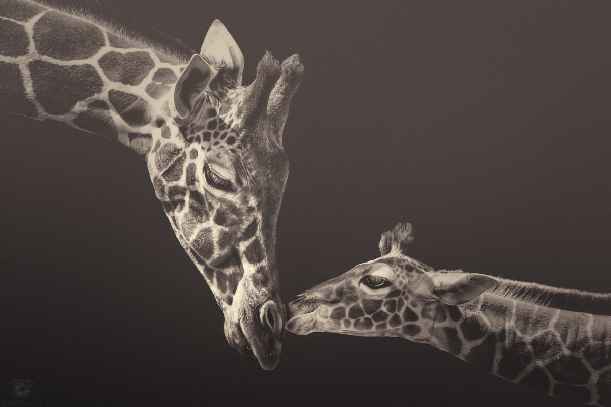 Evolution is so creative. That's how we got giraffes (Kurt Vonnegut)!