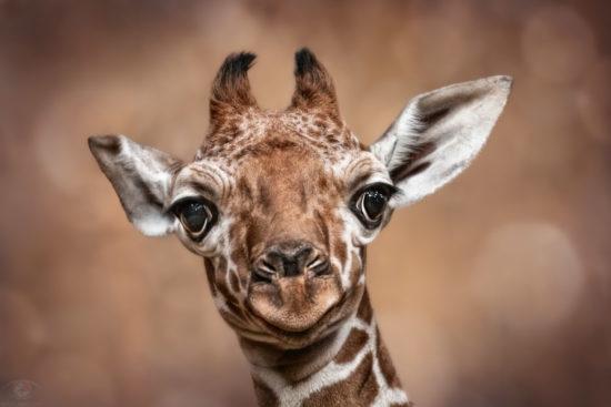 Evolution is so creative. That's how we got giraffes :o) (Kurt Vonnegut)!
