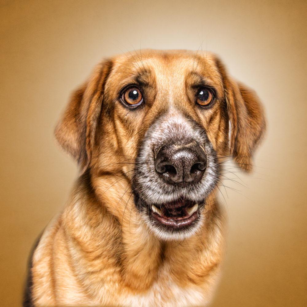 Gib dem Menschen einen Hund und seine Seele wird gesund - Give man a dog for the health of his soul (Hildegard von Bingen)! Der bezaubernder Ben mit seinen phantastischen Augen - aus einer spanischen Perrera enkommen und nun Seelengefährte von Julia Zaum - ich danke euch für die wunschschönen Augenblicke :o)!