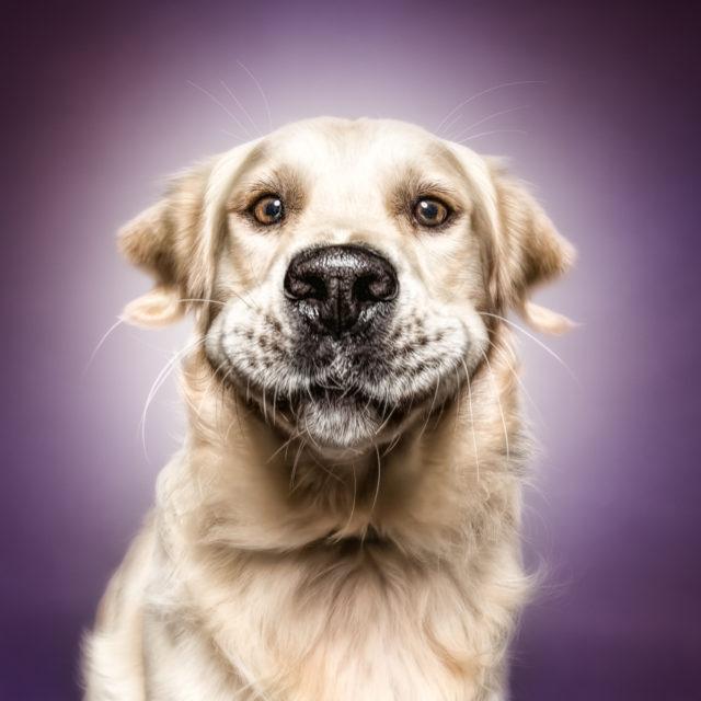 Wer den Tag mit einem Lachen beginnt, hat ihn bereits gewonnen - Who starts the day with a laugh, has already won it (Cicero)