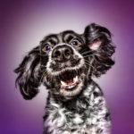 Funny (Dog) Faces thumbnail