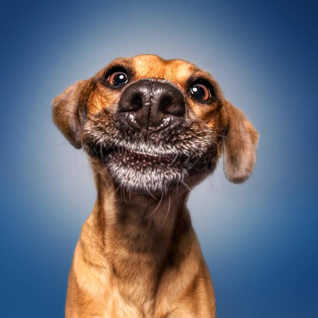 Das Glück sieht aus wie ein Hund, würde ich sagen (Chapman Pincher)