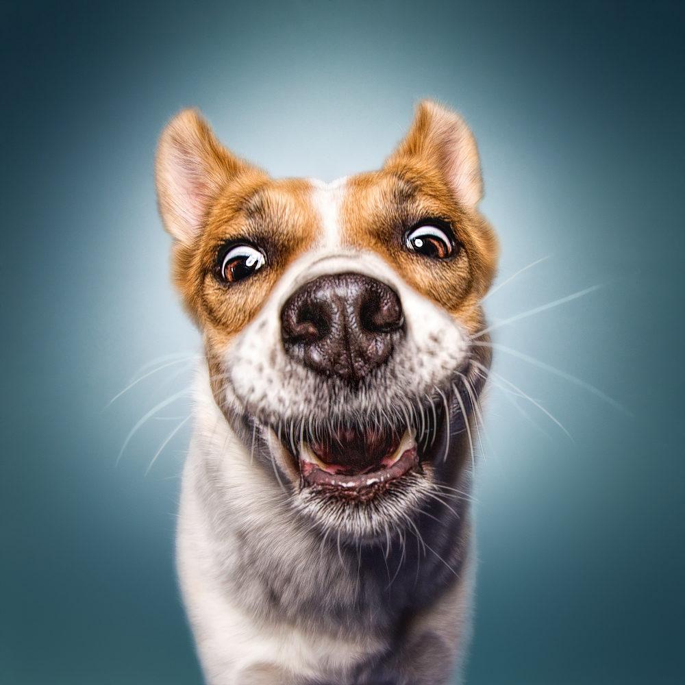 """Hundehaare kann man wegfegen. Pfotenabdrücke auf dem Boden kann man wegwischen. """"Nasenkunst"""" am Fenster kann man wegputzen. Aber die Spuren, die sie in unseren Herzen hinterlassen, sind für die Ewigkeit (Johanna Pelz). Johanna Pelz"""