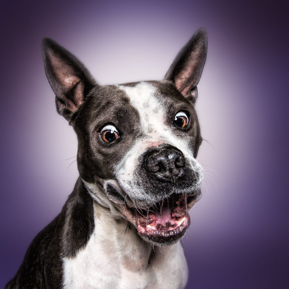 Lebensfreude lässt sich am besten vom Hund lernen - Joy of life can best learn from the dog (Nina Sandmann)!