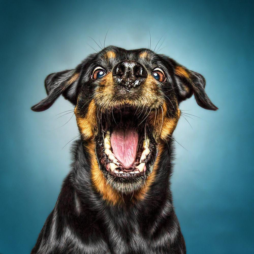Mit Hunden zusammen zu sein ist Balsam für die Seele - to be with dogs are balm for the soul. Aus der Hölle ins Paradies, danke Raya für die Momente mir dir und deiner Familie. Du bist ein Goldschatz und bleibst für immer in unser Herz!