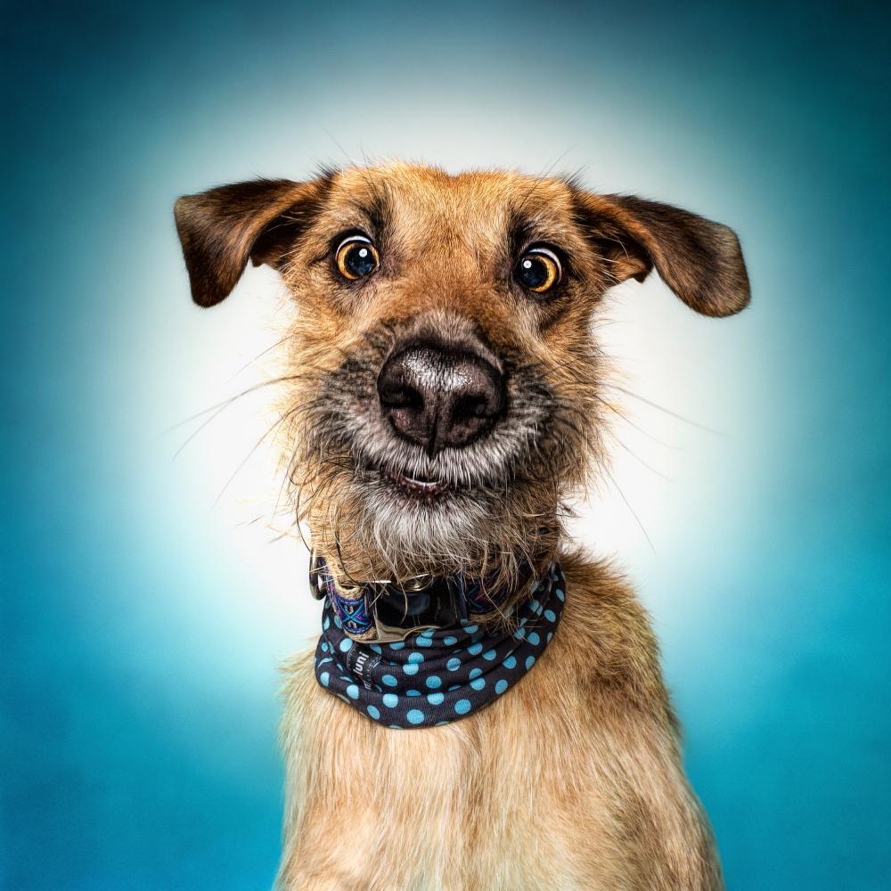 Funny (Dog) Faces - Erblicken.com