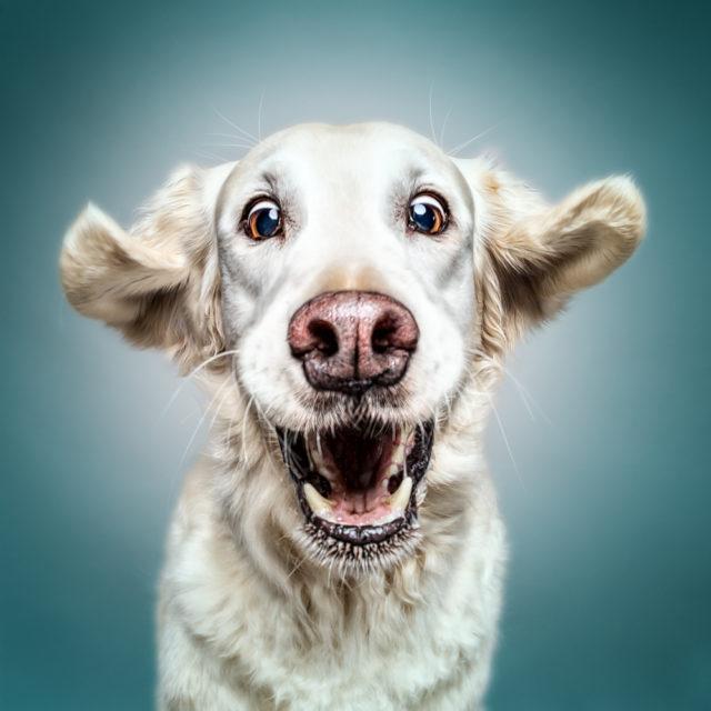 Hunde können lächeln und lachen - ob sie aber über uns Menschen lachen, ist das Geheimnis der Hunde (*Oliver Jobes). Worüber wohl der entzückende Sam lacht? Das kann uns wohl nur seine Frauchen Rita Menzel beantworten. Es war uns eine wahre Freude, so einen tollen Seelenschatz und so einen lieben Menschen kennenlernen zu dürfen! Sam und Rita ihr beide wart phantastisch!