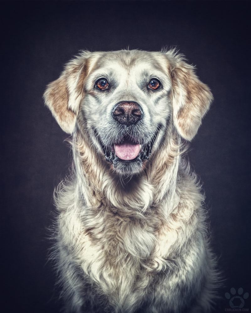 Weil Engel nicht überall sein können, gibt es Herzhunde wie Ayla!