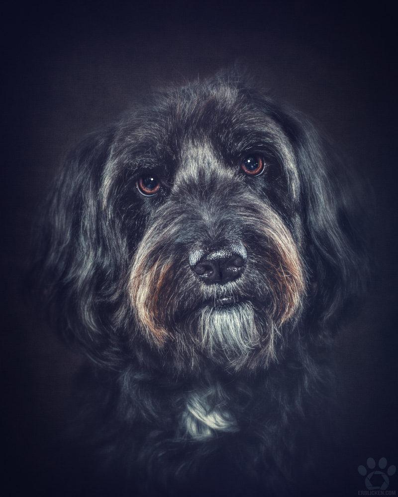 Jeder Hund, jedes Tier sollt in seinem Leben die Chance bekommen, seinen Pfotenabdruck im Herzen eines Menschen zu hinterlassen (Sylvia Raßloff)!