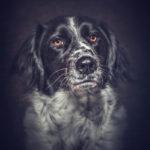 Pet Portraits thumbnail