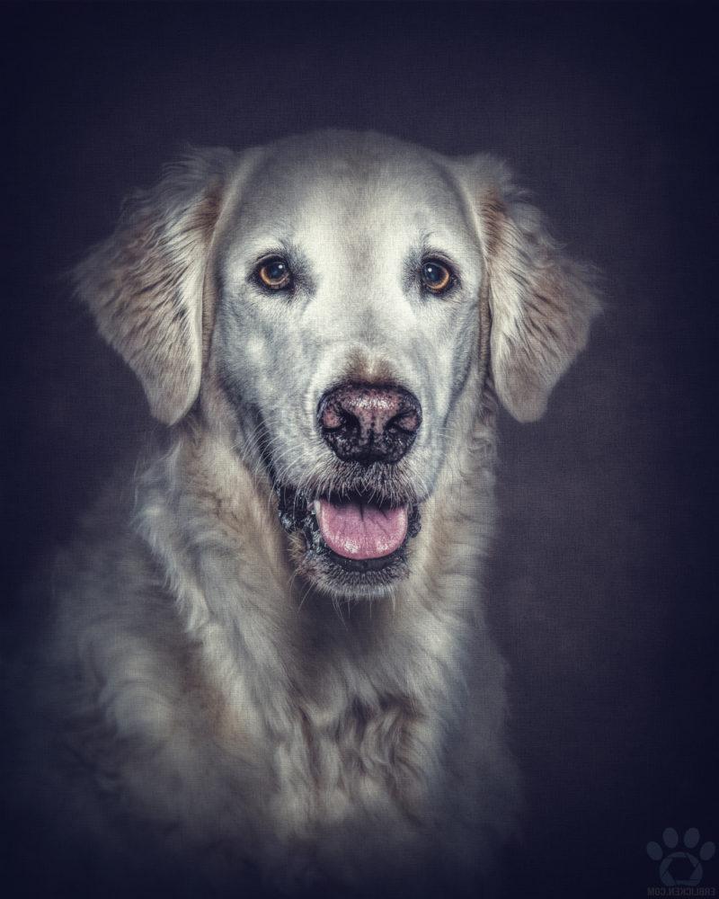 Hunde kommen in unser Leben, um zu bleiben. Sie gehen nicht fort, wenn es schwierig wird, und auch, wenn der erste Rausch verflogen ist, sehen sie uns noch immer mit genau diesem Ausdruck in den Augen an. Das tun sie bis zu ihrem letzten Atemzug. Vielleicht, weil sie uns von Anfang an als das sehen, was wir wirklich sind: fehlerhafte, unvollkommene Menschen. Menschen, die sie sich dennoch genau so ausgesucht haben. Ein Hund entscheidet sich einmal für den Rest seines Lebens. Er fragt sich nicht, ob er wirklich mit uns alt werden möchte. Er tut es einfach. Seine Liebe, wenn wir sie erst verdient haben, ist absolut (Pablo Picasso)!