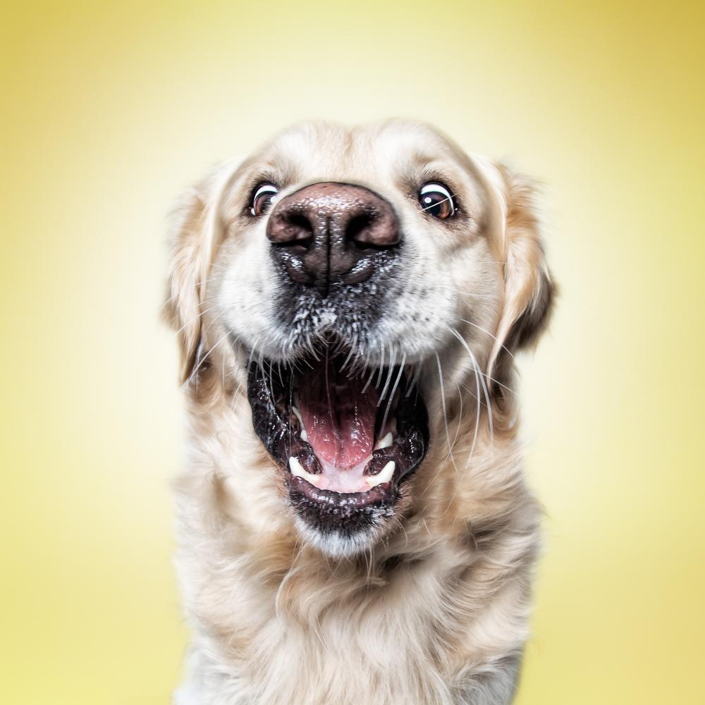 Funny (Dog) Faces ‹ Erblicken.com